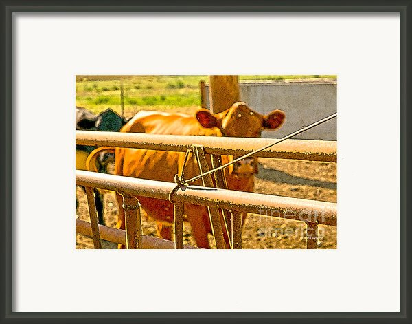 Cows Coming Home Framed Print By Artist And Photographer Laura Wrede