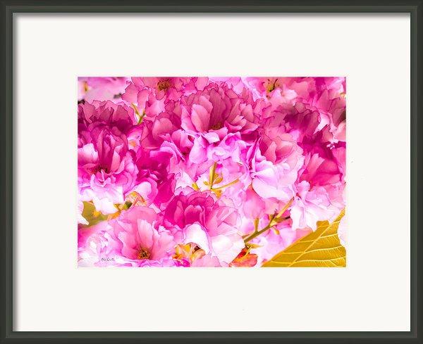 Crabapple Impressions 2 Framed Print By Bob Orsillo