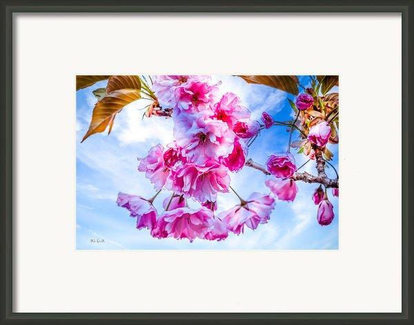 Crabapple Impressions Framed Print By Bob Orsillo