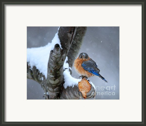 Cranky Can Be Cute Framed Print By Nava Jo Thompson