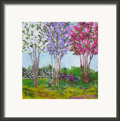 Crepe Myrtles Framed Print By Angela Annas