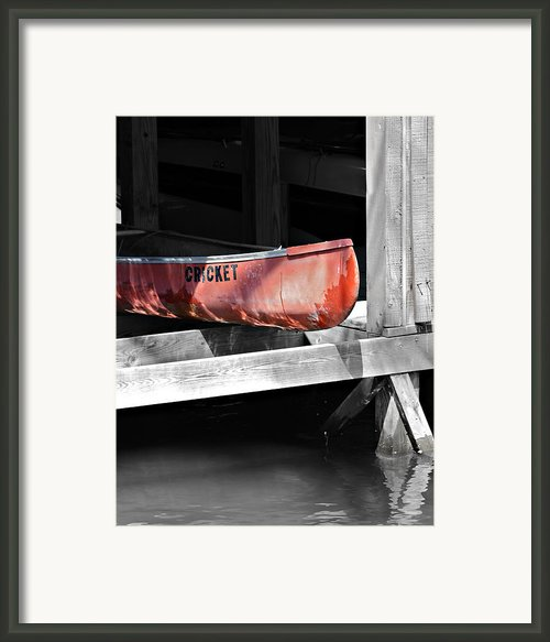 Cricket Framed Print By Susan Leggett