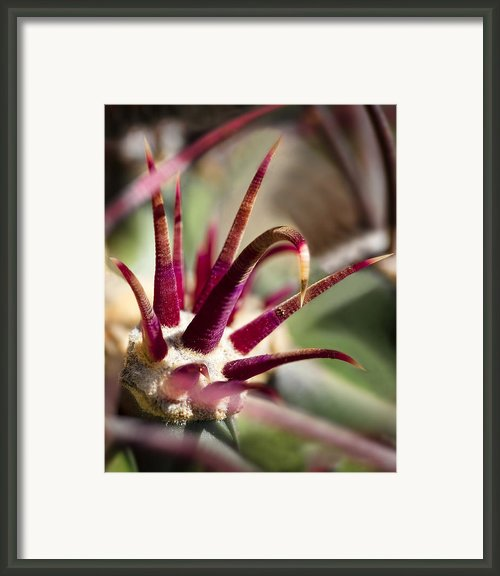 Crown Framed Print By Kelley King