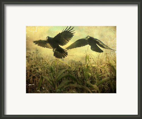 Crows Of The Corn 2 Framed Print By Gothicolors And Crows