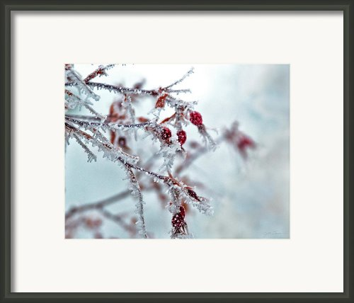 Crystal Rose Framed Print By Julie Magers Soulen