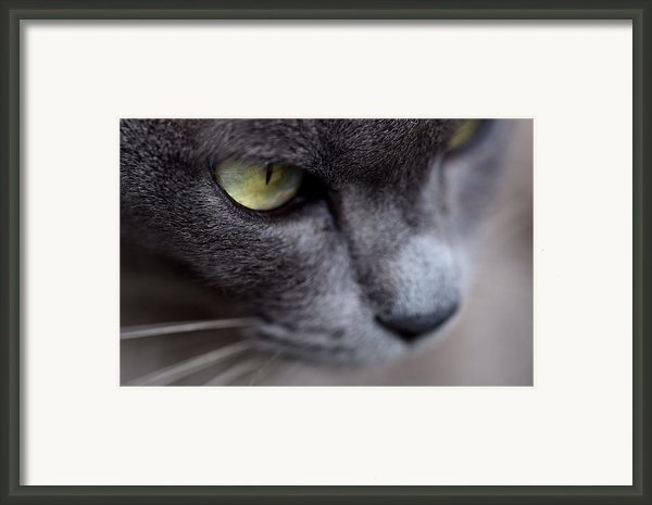 Curiosity  Framed Print By Nicci Gelnar
