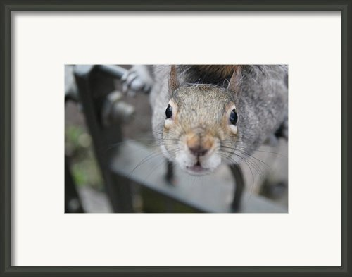 Curious Framed Print By Jasna Buncic