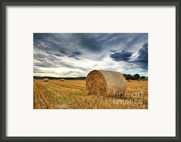 Cut Field Framed Print By Jane Rix