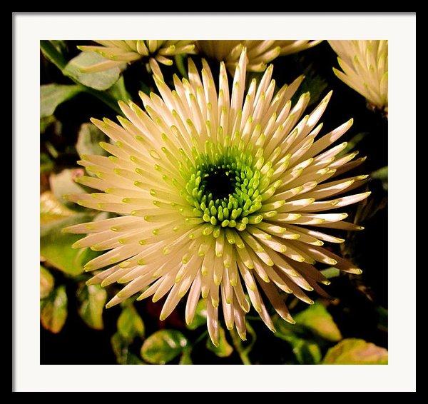 Cut Flowers Framed Print By Joyce Woodhouse