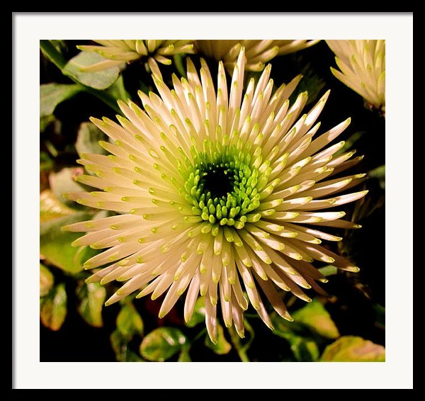 Cut Flowers Framed Print By Joyce Woodhouse