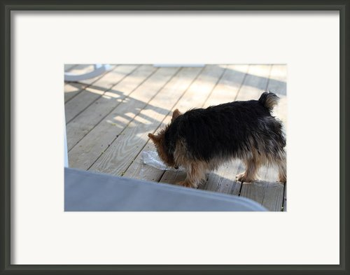 Cutest Dog Ever - Animal - 01132 Framed Print By Dc Photographer