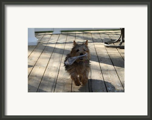 Cutest Dog Ever - Animal - 01134 Framed Print By Dc Photographer