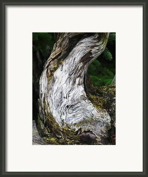 Cycle Of Life Framed Print By Abeautifulsky  Photography