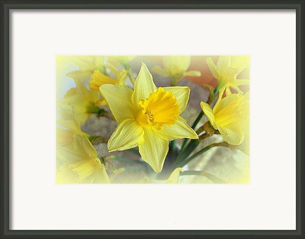 Daffodil Framed Print By John Tidball