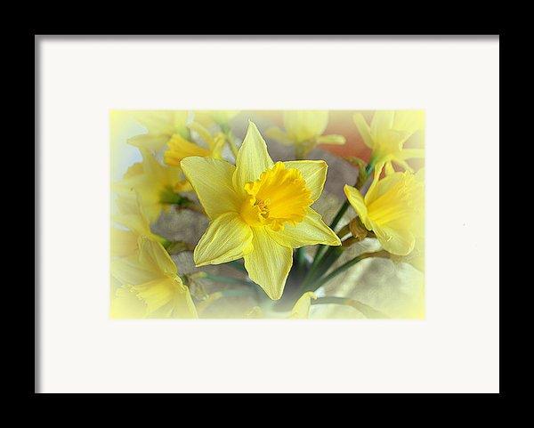 Daffodil Framed Print By Bishopston Fine Art