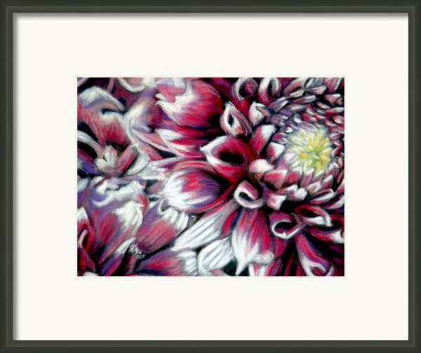 Dahlias In Pastel Framed Print By Antonia Citrino