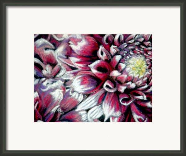 Dahlias In Pastel Framed Print By Antonia Citrino