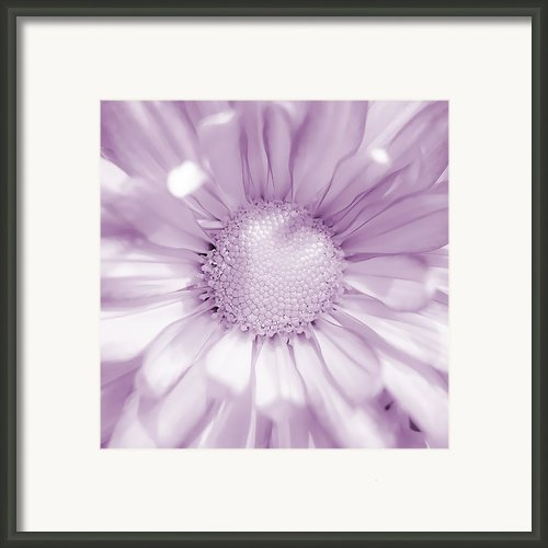 Daisy - Purple Framed Print By Scott Norris