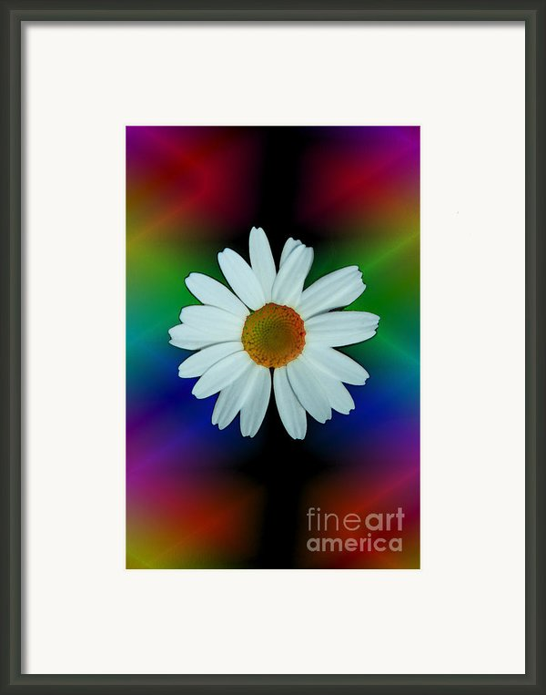 Daisy Bloom In Neon Rainbow Lights Framed Print By Imagesasart Photos And Graphics