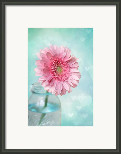 Daisy Love Framed Print By Amy Tyler