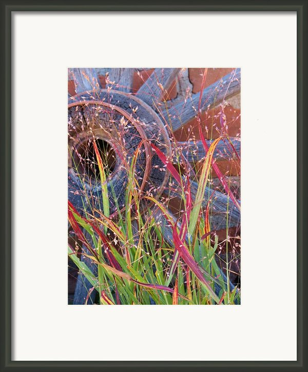 Dance Of The Wild Grass Framed Print By Feva  Fotos