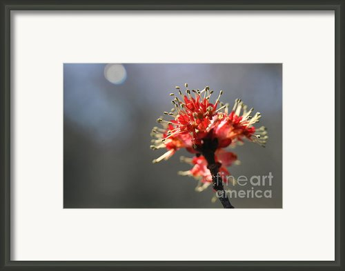 Dancing Light  Framed Print By Neal  Eslinger