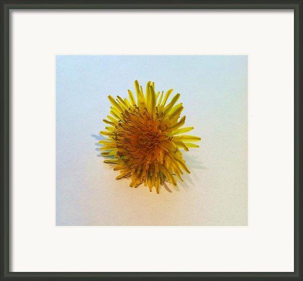 Dandelion Ii Framed Print By Anna Villarreal Garbis
