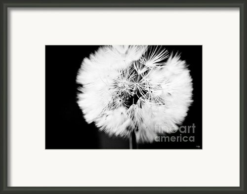 Dandelion Framed Print By Scott Pellegrin