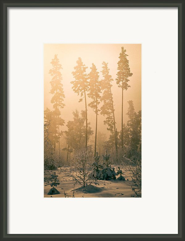 Dawn In The Forest Bashkir Framed Print By  Ilya Moskovets