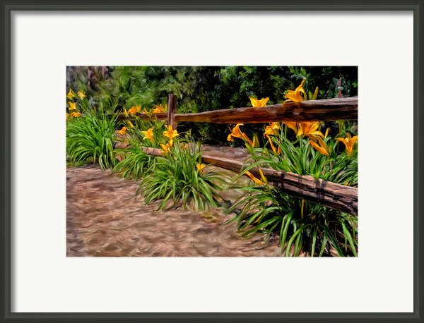 Day Lilies Framed Print By Michael Pickett