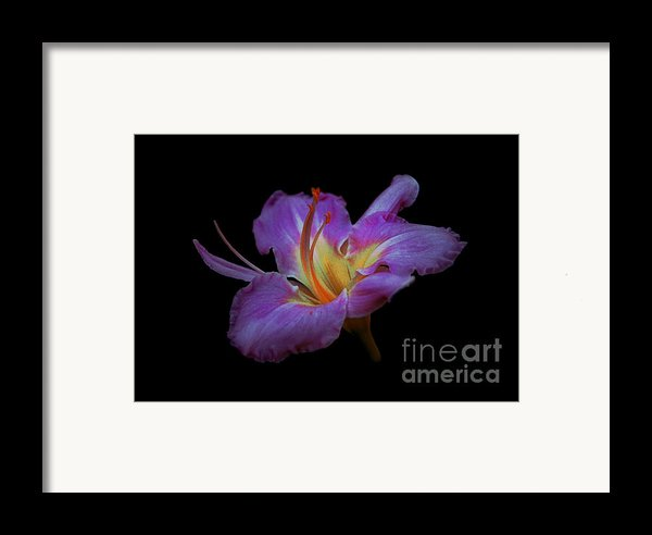 Daylily Bloom In The Dark Framed Print By Imagesasart Photos And Graphics