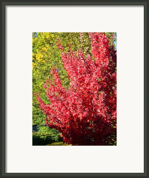 Days Like This Framed Print By Kathy Bassett