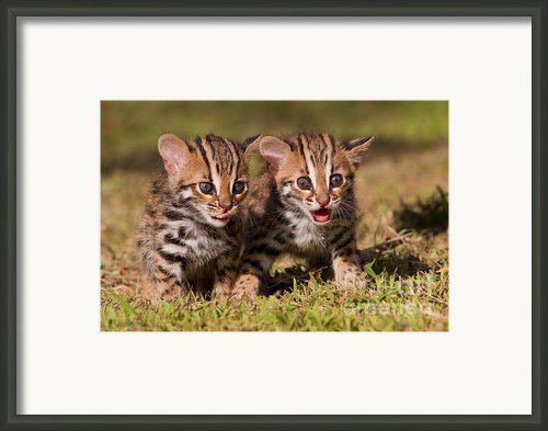 Dazed And Confused Framed Print By Ashley Vincent