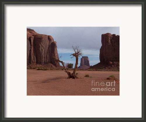 Dead-wood Framed Print By Luke Moore