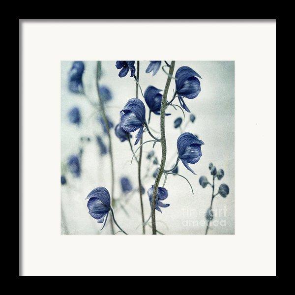 Deadly Beauty Framed Print By Priska Wettstein
