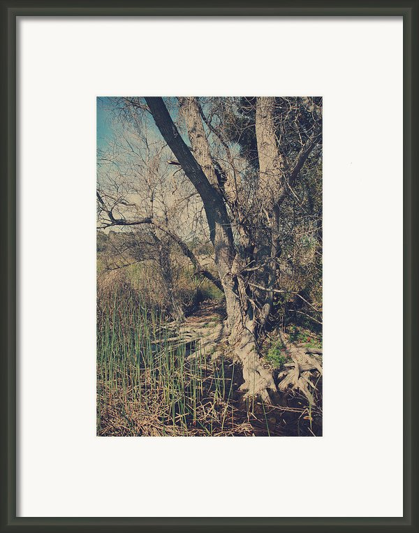 Deep Roots Framed Print By Laurie Search