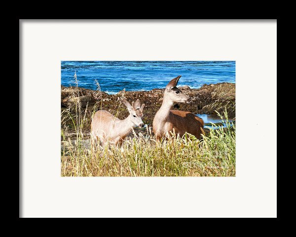 Deer On The Beach At Point Lobos Ca Framed Print By Artist And Photographer Laura Wrede