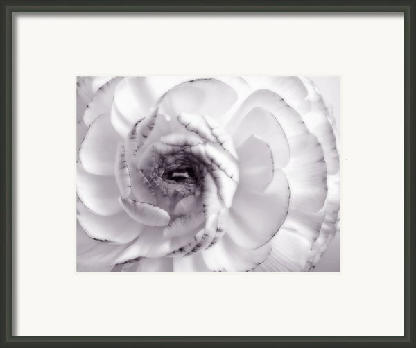 Delicate - White Rose Flower Photograph Framed Print By Artecco Fine Art Photography - Photograph By Nadja Drieling