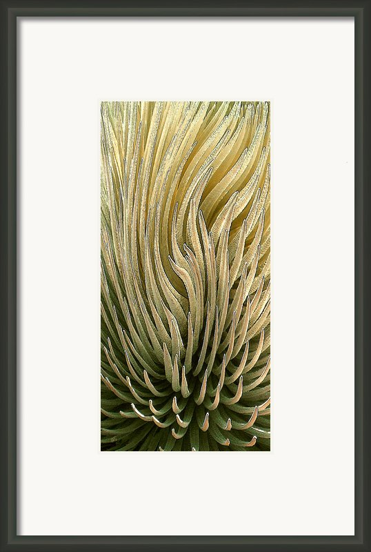 Desert Green Framed Print By Ben And Raisa Gertsberg