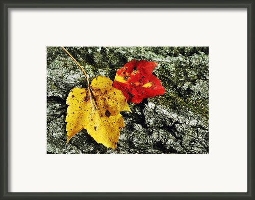 Deux Feuilles Framed Print By Jamart Photography