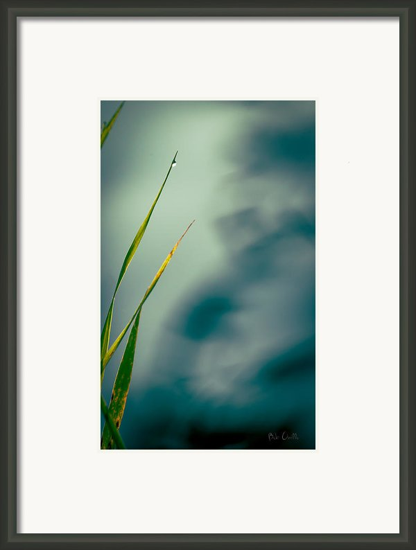 Dew Drop Framed Print By Bob Orsillo