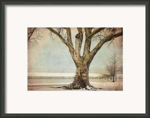 Dignity Framed Print By Betty Larue