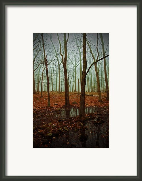 Do We Dare Go Into The Woods Framed Print By Karol  Livote