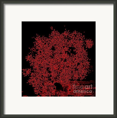 Do You See Me Framed Print By Shelia Kempf