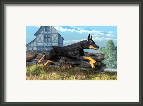 Doberman Framed Print By Daniel Eskridge