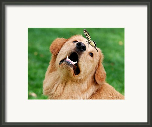 Dog And Butterfly Framed Print By Christina Rollo