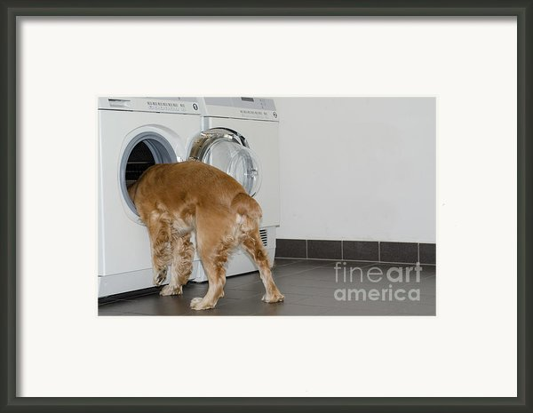 Dog And Washing Machine Framed Print By Mats Silvan