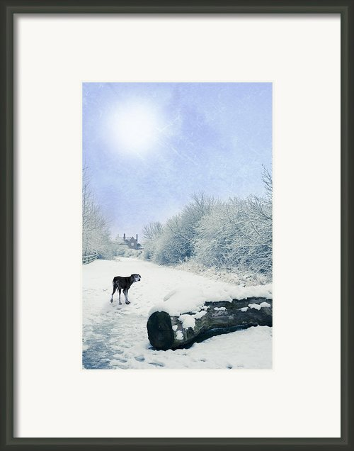 Dog Looking Back Framed Print By Christopher And Amanda Elwell