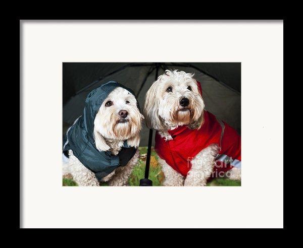 Dogs Under Umbrella Framed Print By Elena Elisseeva
