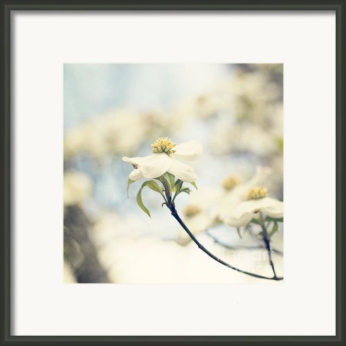 Dogwood No 1 Framed Print By Erin Johnson